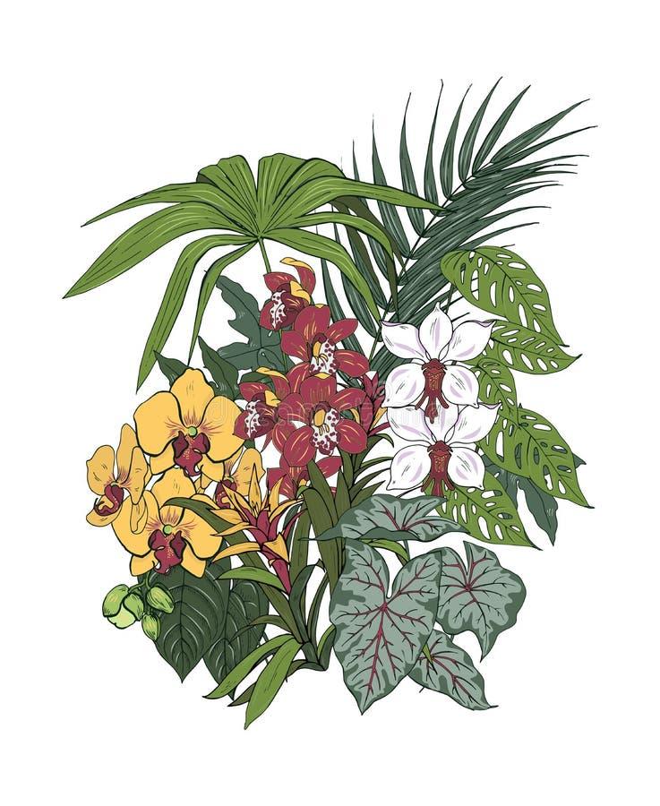 Fleurs de plantes tropicales et d'orchidée illustration stock