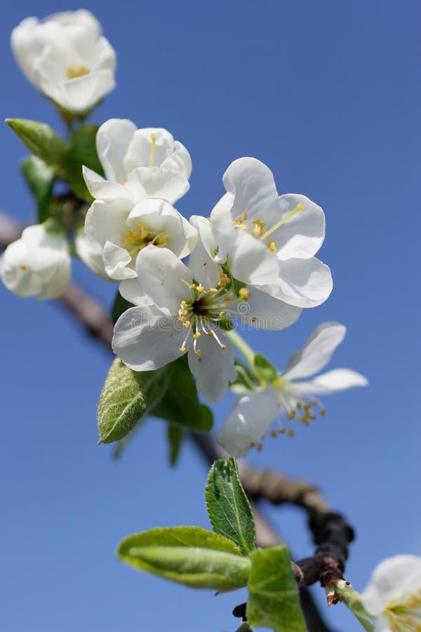 Download Fleurs de plomb image stock. Image du branchement, brindille - 728185