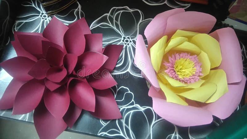 Fleurs de poivre photo stock