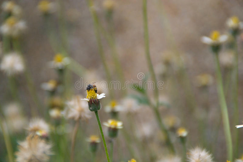 Fleurs de pollination d'abeille photo libre de droits