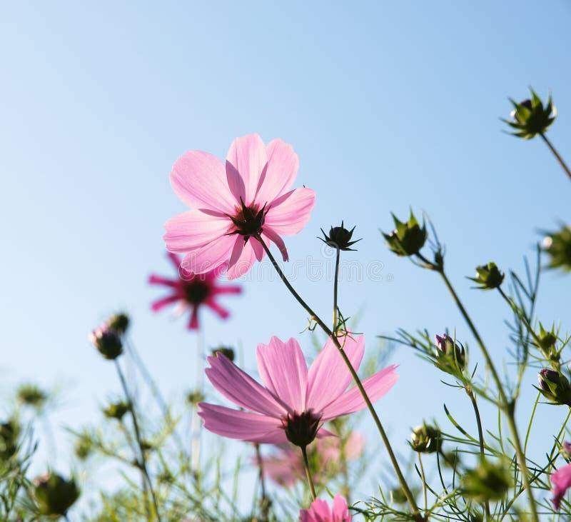 Fleurs de pourpre de fleur images libres de droits