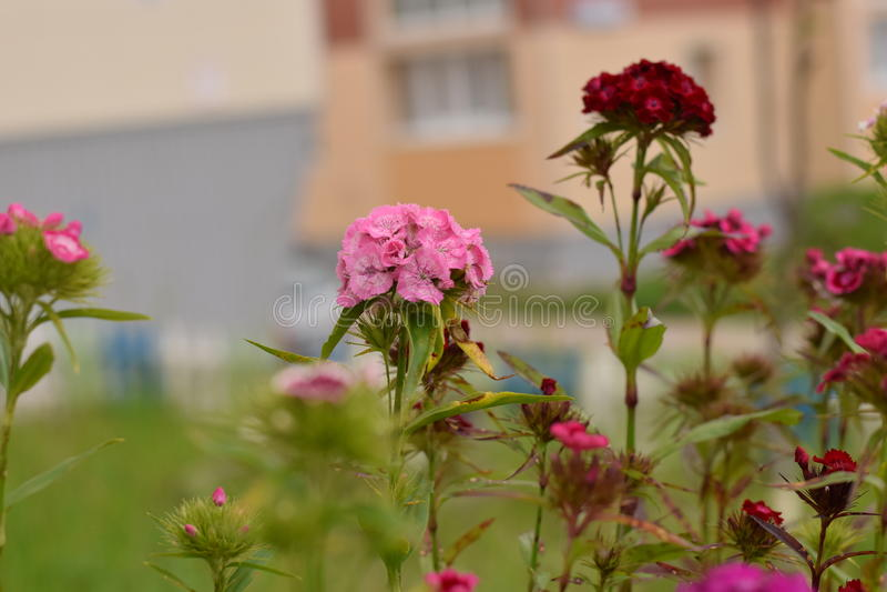 Fleurs de pré images libres de droits