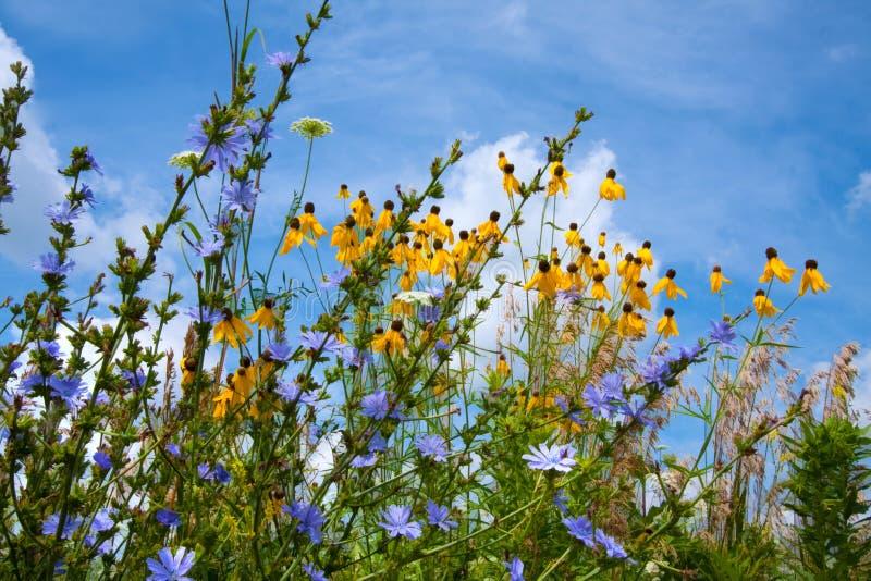 Fleurs de prairie photo libre de droits