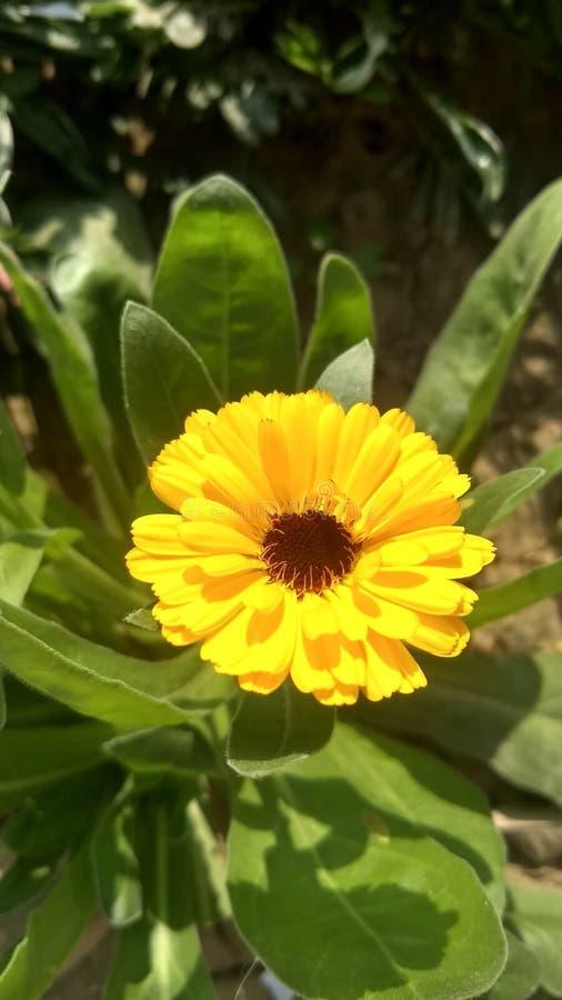 Fleurs de Preety Lumineux et beau en même temps images stock