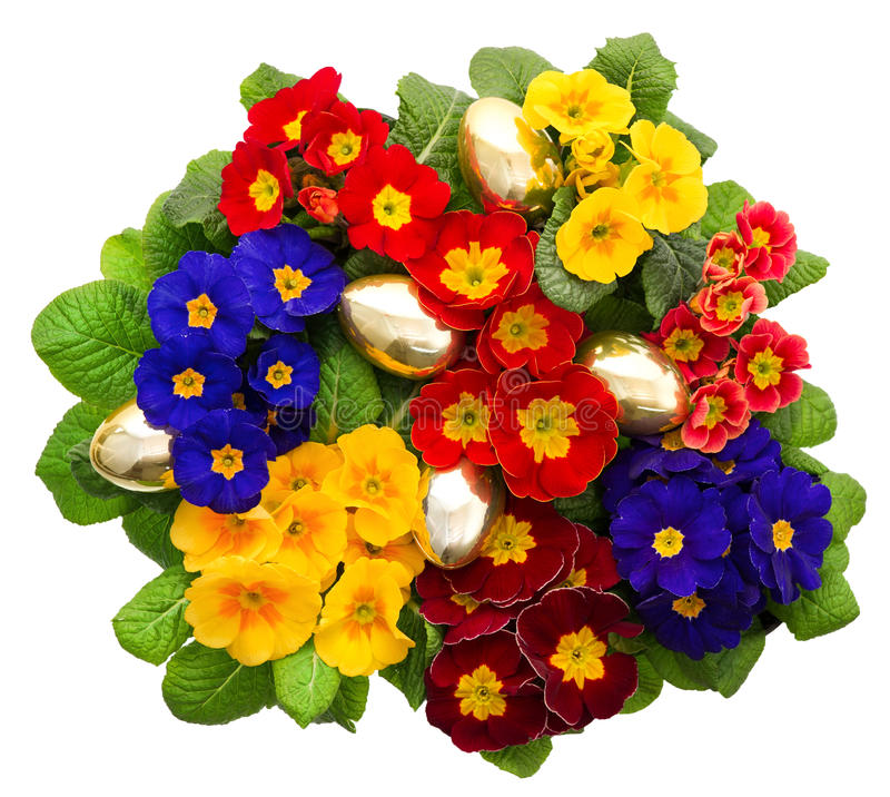 Fleurs de primevère de Variaty avec les oeufs de pâques d'or photographie stock libre de droits