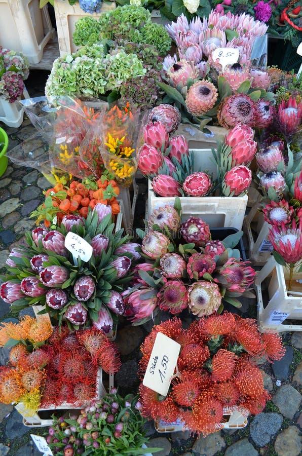 Fleurs de Protea sur le marché d'un fermier photos stock