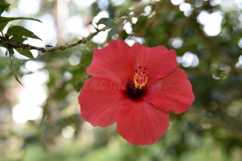 Fleurs de proximité dans le jardin, ville de Baguio, Philippines photos libres de droits