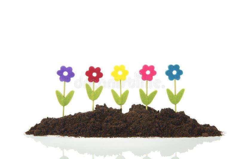 Fleurs de rang?e dans le jardin photo libre de droits