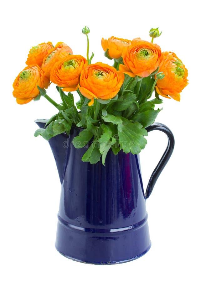 Fleurs de Ranunculus photo stock