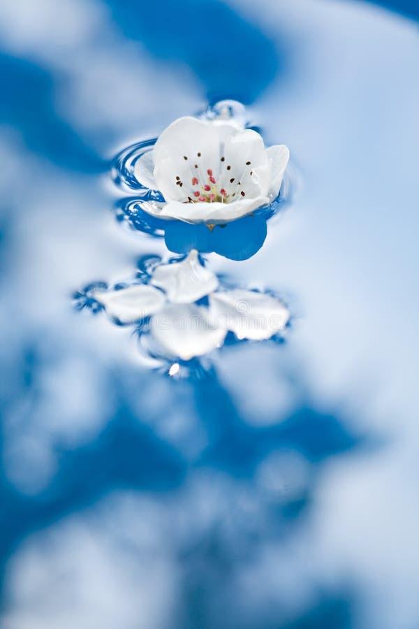 Fleurs de ressort photographie stock
