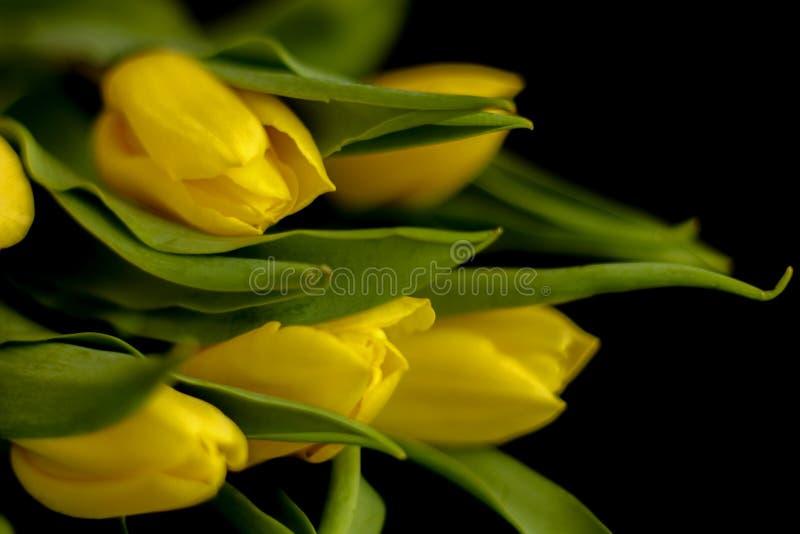 Fleurs de ressort - concept parfait pour des m?dias sociaux images stock