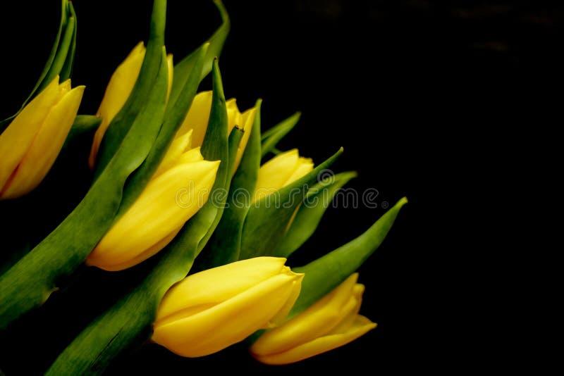Fleurs de ressort - concept parfait pour des m?dias sociaux photos stock