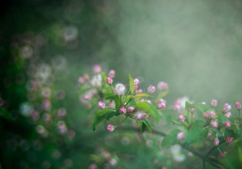Fleurs de ressort couvertes de brume photographie stock