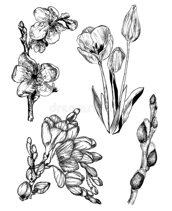 Fleurs de ressort dans le style de croquis : Sakura, tulipe, freesia et Willo illustration stock