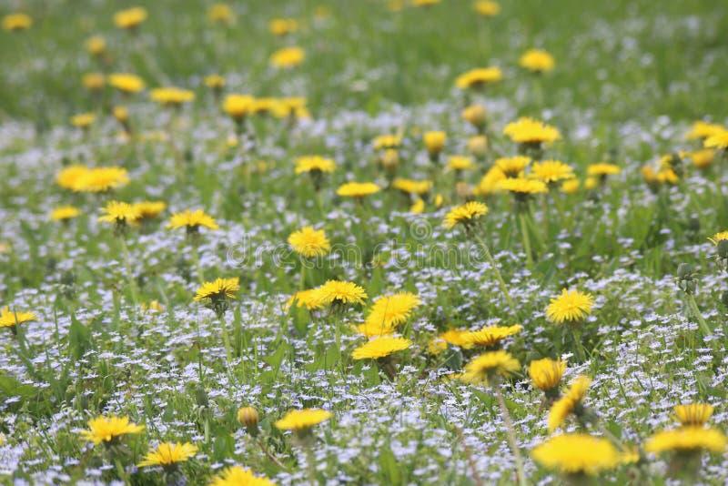 Fleurs de ressort dans les montagnes photographie stock