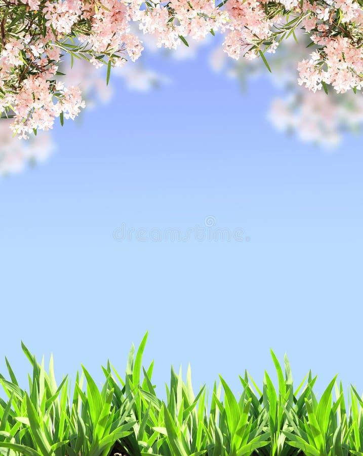 Fleurs de ressort de couleur rose et d'herbe verte photographie stock