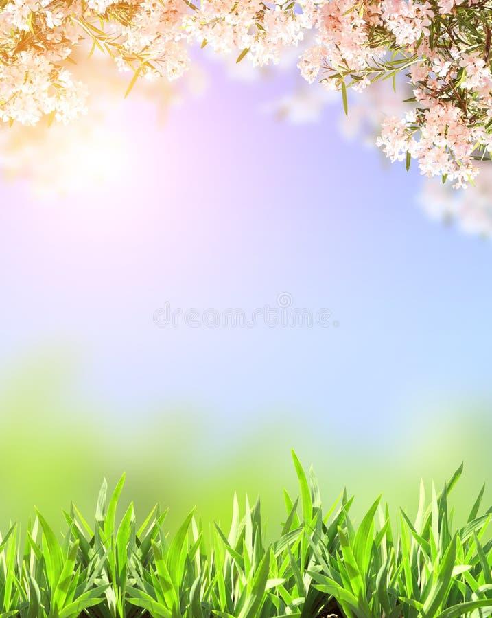 Fleurs de ressort de couleur rose et d'herbe verte photographie stock libre de droits