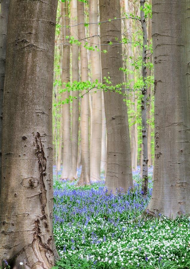 Fleurs de ressort de forêt image libre de droits