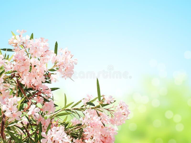 Fleurs de ressort des feuilles roses de couleur et de vert photographie stock libre de droits