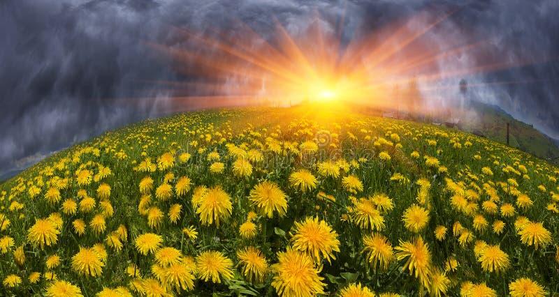 Fleurs de ressort et d'été de clairière images libres de droits