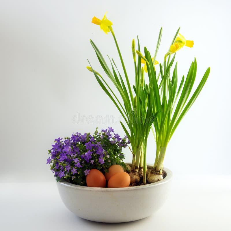 Fleurs de ressort et oeufs mis en pot comme décoration de Pâques, jonquilles a image libre de droits