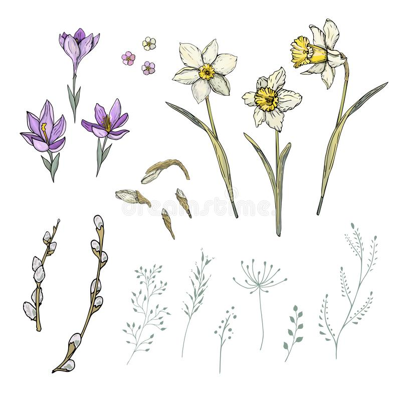 Fleurs de ressort réglées avec le narcisse et le crocus images libres de droits