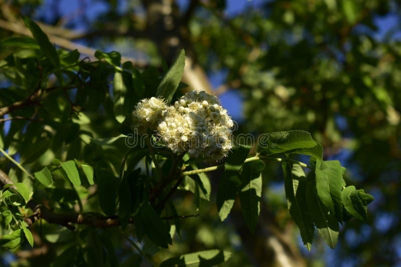 Fleurs de ressort sur des arbres et des usines photo libre de droits