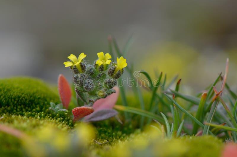 Download Fleurs De Ressort Sur Le Champ Image stock - Image du vert, tête: 56477539