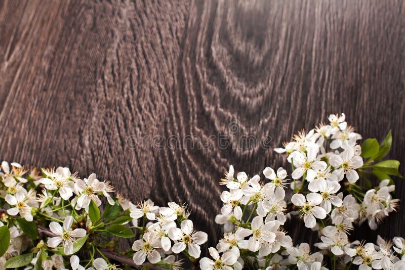 Fleurs de ressort sur le fond en bois foncé images stock