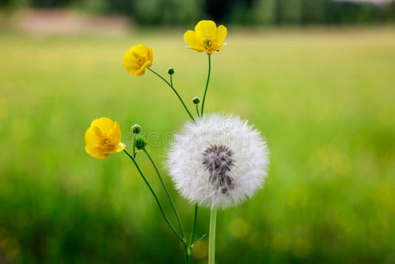 Fleurs de ressort sur le pré photographie stock