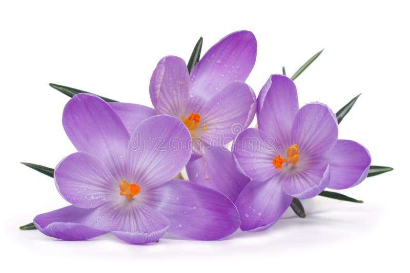 Fleurs de ressort sur un fond blanc photos stock