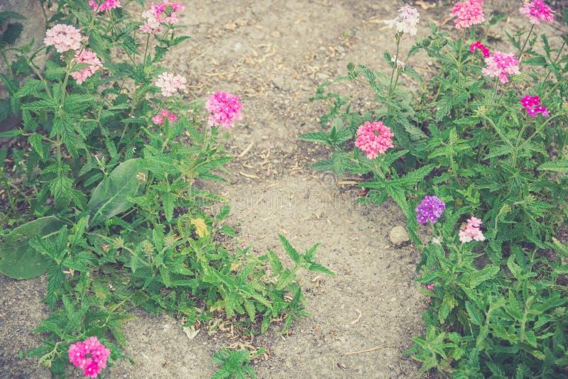 Fleurs de ressort de vintage photo libre de droits