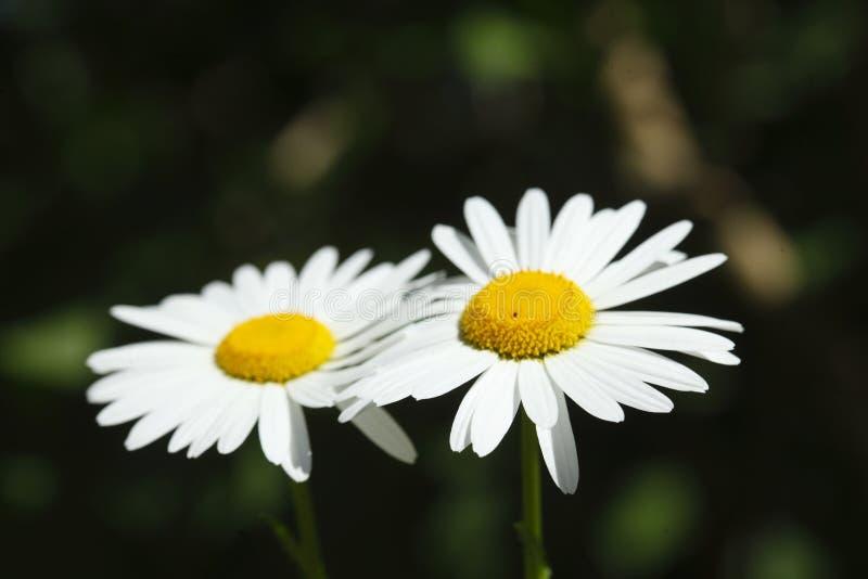Fleurs de rite de marge image stock