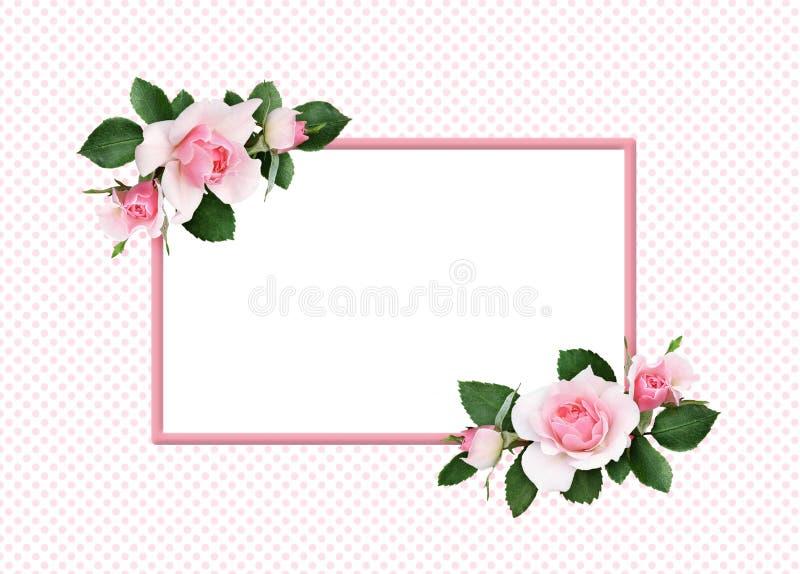 Fleurs de rose de rose et feuilles de vert dans arrangemen faisants le coin floraux illustration stock