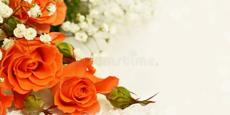 Fleurs de Rose sur le fond blanc images libres de droits