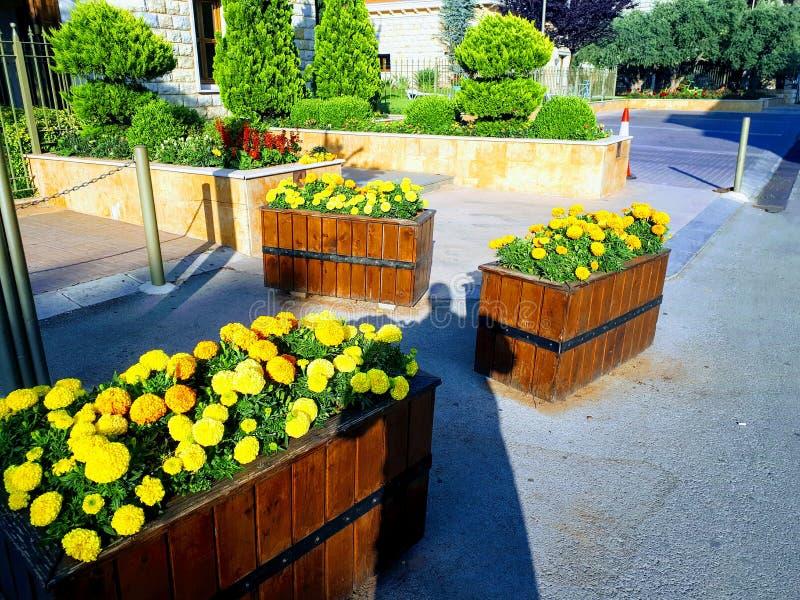 Fleurs de rue au Liban photo libre de droits