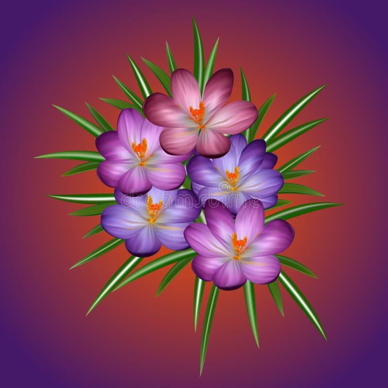 Fleurs de safran en soleil de printemps illustration de vecteur