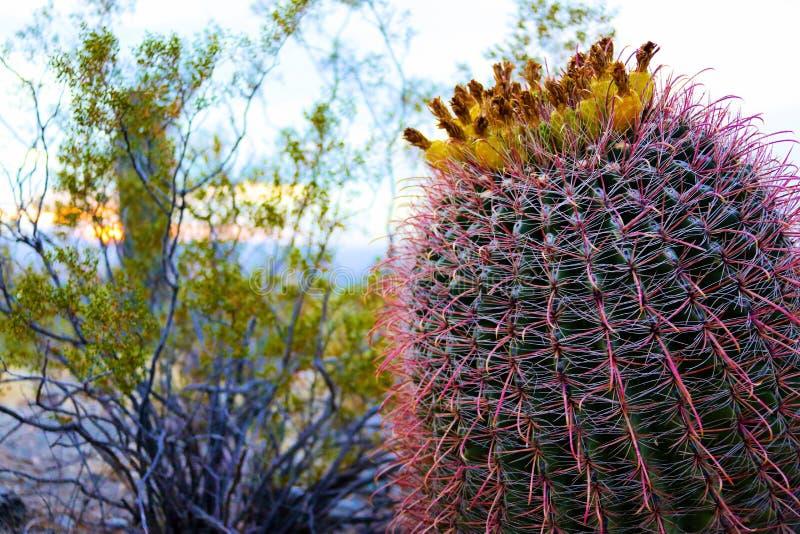 Fleurs de Saguaro images libres de droits