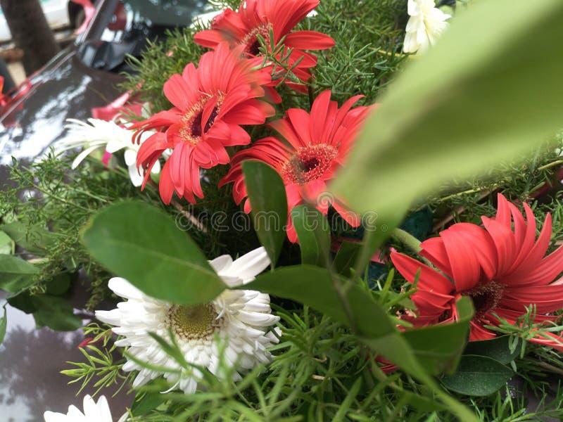 fleurs de salutations image libre de droits