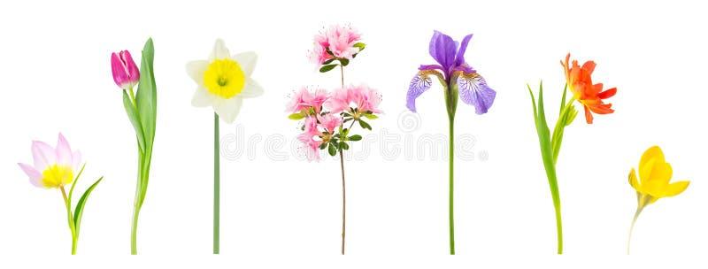 Fleurs de source d'isolement sur le blanc photographie stock