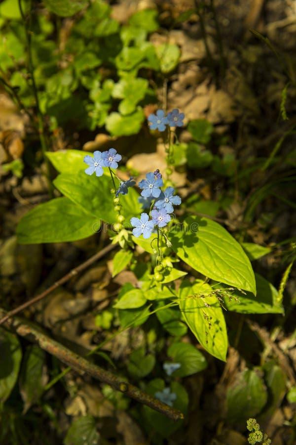 Fleurs de source dans la forêt photo libre de droits