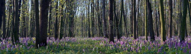Fleurs de source dans la forêt photos libres de droits