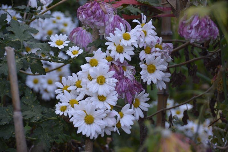 Fleurs de source dans le jardin image stock