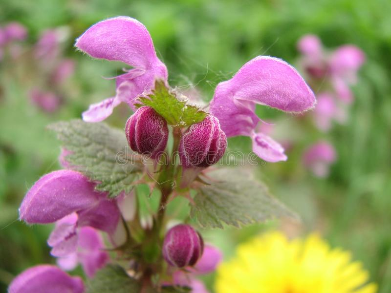Fleurs de source dans le pr? photos libres de droits
