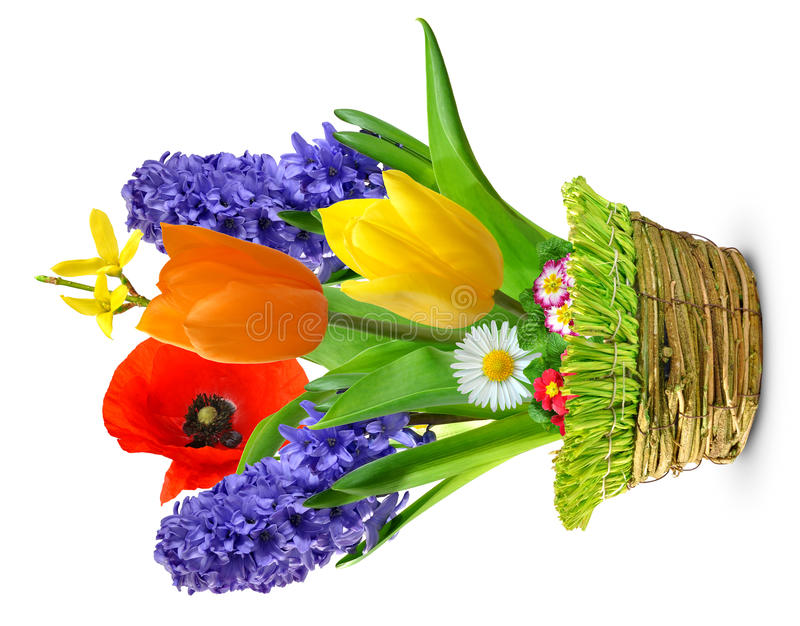 Fleurs de source dans un bac photo libre de droits