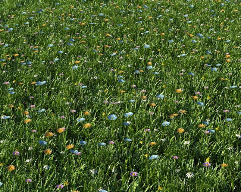 Fleurs de source dans un pré illustration stock