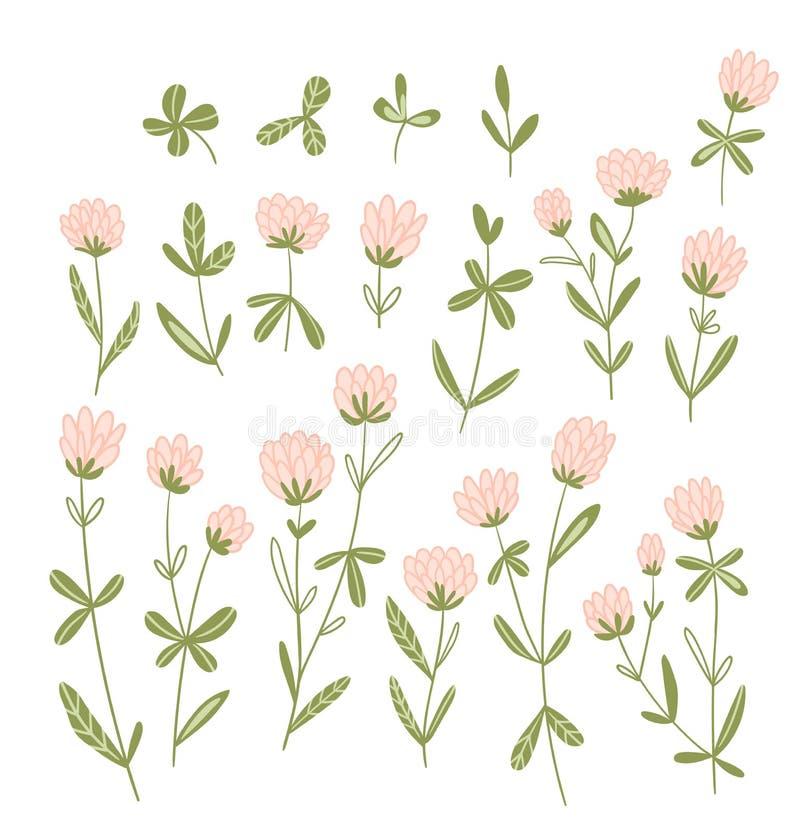 Fleurs de trèfle roses isolées sur fond blanc Ensemble floral vectoriel De beaux éléments naturels dessinés à la main illustration libre de droits