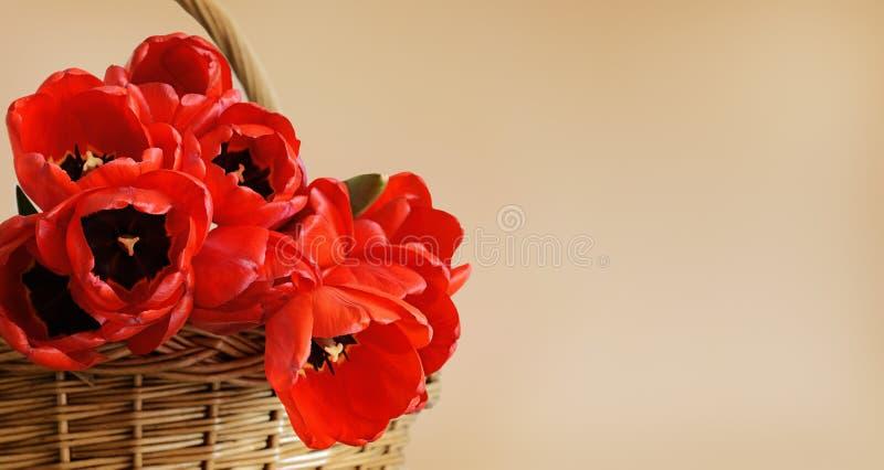 Fleurs de tulipe rouge dans un panier photographie stock libre de droits
