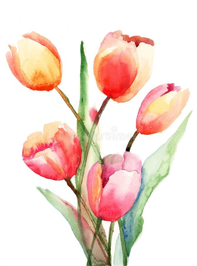 Fleurs de tulipes, peinture d'aquarelle illustration stock