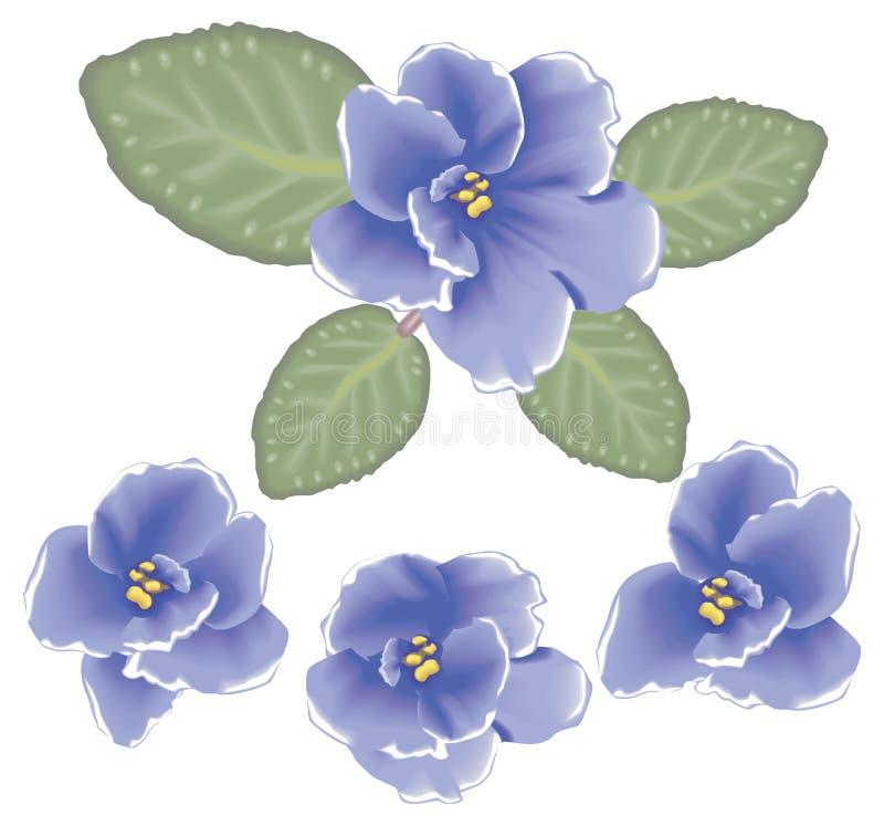 Fleurs de violette de vecteur illustration de vecteur